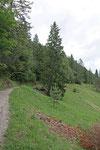 Wanderweg nahe Wallgau