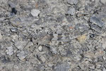 Blauflügelige Sandschrecke, Sphingonotus caerulans