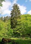 unterwegs im Eltzbachtal