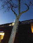 Am Baum vor dem Hospital, Stationen im Jetzt: Mensch von Ludger Wörtler