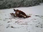 Schneefreuden
