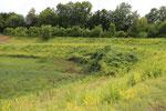 Standort im Regenrückhaltebecken (Foto Griese)