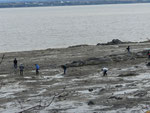Quelques chercheurs sur la plage à St-Jean, Île d'Orléans, Qc.