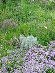 wilder Kräutergarten