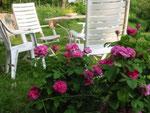 SItzplatz bei den Rosen