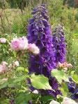 Rosen und Rittersporn