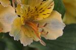 aus Blumenstrauß - was auch immer
