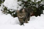 Herkules im Schnee