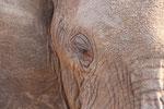 ein paar Naheindrücke von Elefanten