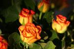effer Blumenstrauß