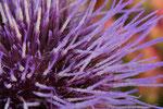 Distel aus Blumenstrauß