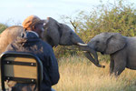 Straßensperre durch Elefanten