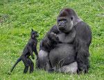 Gaia Zoo Kerkrade