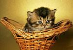 Дш котёнок