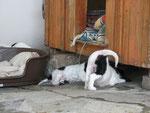 oder drunter? Die Althunde haben keine Ruhe mehr!