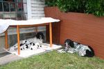 Erster Ausflug in den Garten. Ein Tisch dient als Sonnenschirm! 3. Juni