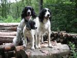 Die drei bleiben in Grinzing. Cibby sucht ein bischen nach ihrem Bruder aber wir werden mit Treffen den Spieltrieb befriedigen!