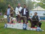 EMY - prop. GALLERINI FABIO - 1° ECC. CLASSE CAMPIONI - CAMPIONE SOCIALE ed UMLAG 2012 - Raduno CIL Bagnara 13-10-2012