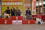 GINKO - 1° ECC CAC - CLASSE LIBERA - MOSTRA SPECIALE - PADOVA 29-03-2014 - GIUDICE GIOVANNI MORSIANI