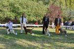 CORA - Propr. FOIANESI GIANFRANCO - 4° CLASSIFICATA CLASSE GIOVANI FEMMINE - RADUNO C.I.L. - BAGNARA 17 OTTOBRE 2009