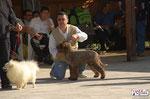 OTTO - Proprietario Caira Fabrizio - CAC & BOB - Expò naz. Siena  10-04-11
