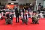 GINKO - 1° ECC CAC - CLASSE LIBERA - EXPò INTERNAZIONALE DI IMOLA - 20-04-2014
