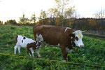 Das Fest das sie da mit uns feierten ist ein Fest zu Ehren der Kuh...