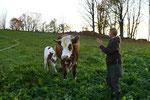 und kommt urspruenglich aus Indien. Die Menschen achten die Kuh und den Bullen dort...