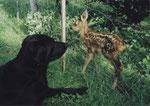 Leica & Bambi am 31. Mai 2002