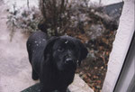 Baby-Leica