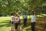 Führung durch den botanischen Garten Peradeniya