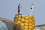 Bild Nr. MW08042-1