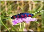 Erotic Butterflies