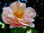 C'è sempre un cuore che batte dentro un fiore...