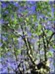 Cava de' Tirreni - Ido Longo, Cielo tra le foglie