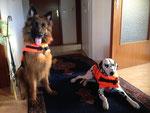 Ayana mit Hundefreundin Rona - Probetragen der Schwimmwesten