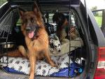 Ayana, Rona und Nanuk im Auto