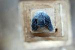 3 Kisten + Gorilla, Pappelholz, Farbe - 2013