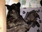 05.03.2013 - Mama Rasta und Hündin grün :)