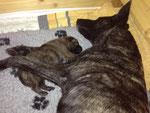 02.03.2013 - Mama und der braune Rüde