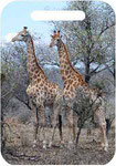 Tall Twins-Private Reserve, South Africa