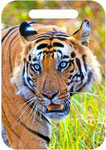 Magnificent & Awe-inspiring!-Bandhavgarh National Park, India