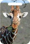 Who, ME?-Masai Mara Game Reserve, Kenya, Africa