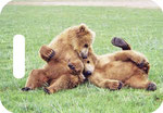 Buddies  - Katmai National Park, Alaska