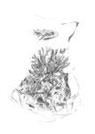 Corail, fusain sur papier, 30 x 40 cm, 2012