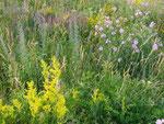 Blumenwiese auf der Donauinsel