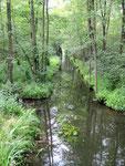 Der Spreewald ist kreuz und quer ...