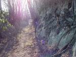 Im oberen Teil ein naturbelassener Hohlweg im Löß.