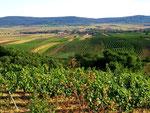 """Der Weinort Hadres vor dem Buchberg (im Pulkautal kurz """"beri"""" genannt)."""