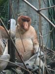 Im Zoo von Singapur